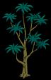 Экзотическое дерево