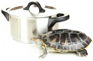 turtle-soup[1]
