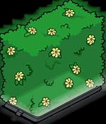 Гологр. цвет. изгородь